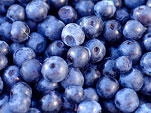 can-dogs-eat-blueberries-2m
