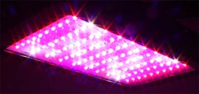 Full Spectrum LED Grow Lights - The Best LED Grow Lights?