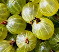 gooseberries-12.jpg