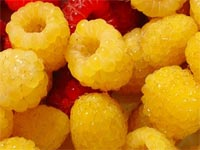red-and-gold-raspberries-1m