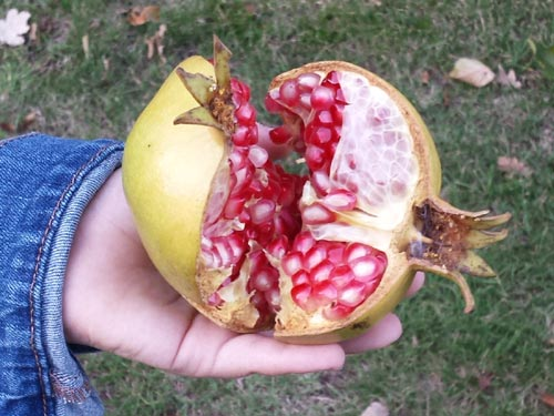 make pomegranate juice