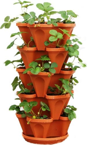 growing strawberries in vertical containers