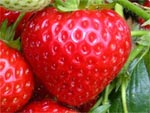 strawberry-ripe-fruit-1m
