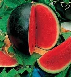 How To Grow Watermelons In Containers